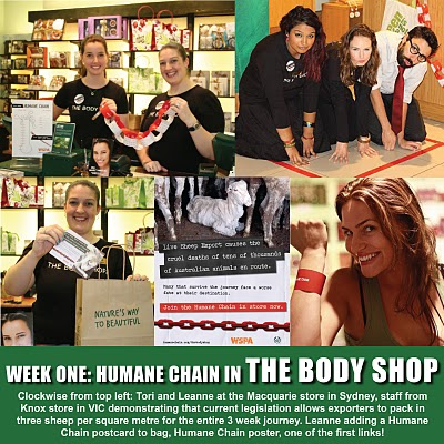 body shop csr case study